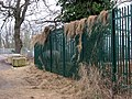 Security fence adorned with hay - geograph.org.uk - 1672096.jpg