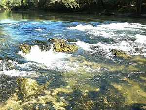 Chipola River - Rapids in the Chipola River
