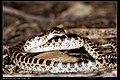Serpentes (7378134980).jpg