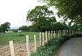 Sheep grazing near Crundale - geograph.org.uk - 418033.jpg