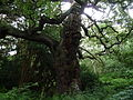 Sherwood Forest 03.jpg