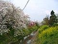 Shiraoka Hayatohori River 1.JPG