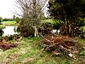 Sitio Arqueológico de Monte Verde 35.JPG