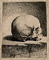 Skull; lateral view. Etching by B. Bossi, 1760. Wellcome V0007915.jpg