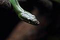 Snake (15437074658).jpg