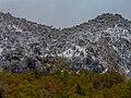 Snow Araucarias in Conguillío National Park in Spring.jpg