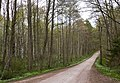 South road through Gullmarsskogen.jpg