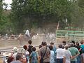 Spectacle de cow-boy pour la Fête de Beaupont de 2012.JPG