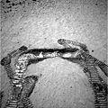 Spirit sur Mars sable creuse Sol 50.jpg