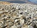 Spot the ptarmigan^ - geograph.org.uk - 1252738.jpg