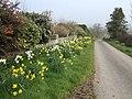 Spring floral display - geograph.org.uk - 378064.jpg