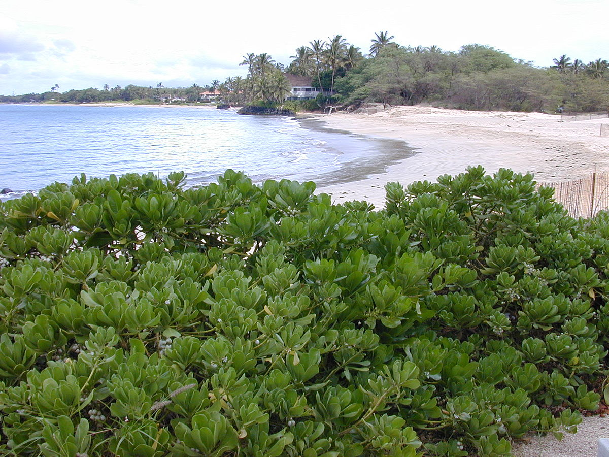 tropical vegetation wikipedia