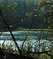Staw Zielony jesienią - panoramio.jpg