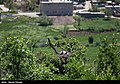 Storks in Marivan County of Iran 12.jpg