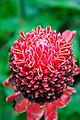 Strange Hawaiian Flower (3002022999).jpg