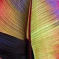 Stripes - Flickr - Stiller Beobachter.jpg
