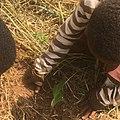 Student planting Tree 05.jpg