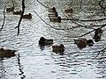 Sulphur Springs Walk (40250015573).jpg