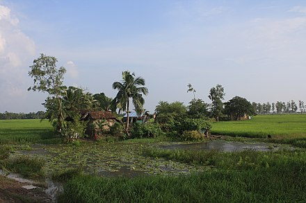 A typical landscape in the Delta with palms, rice, flat, green and ponds SunderbanFarmHouse.JPG