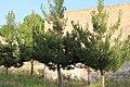 Surb Sargis church, Khoy 02.jpg