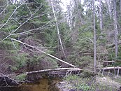 Sweden. Stockholm County. Tyresta National Park 017.JPG