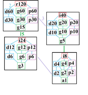 Hexacontagon - The symmetries of a regular hexacontagon, divided into 4 subgraphs containing index 2 subgroups. Each symmetry within a subgraph is related to the lower connected subgraphs.