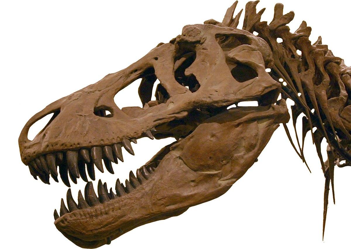 Jurassic Park Roman Wikipdia