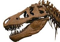 Cráneo de tiranosaurio.
