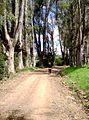 Tacuarembó Department, Uruguay - panoramio (1).jpg