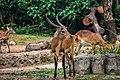 TamanSafariIndonesia111.jpg