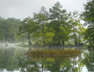 Mountain Fork - Bald Cypress trees often line the lower Mountain Fork.