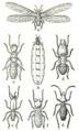 Termites diverses.png