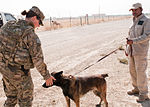 The Bagram beat, a day in the life of a deployed MP 121003-A-GH622-058.jpg