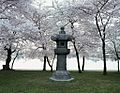 The Japanese Lantern is a stone statue in West Potomac Park 15631v.jpg
