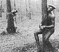 The Lynching of Roosevelt Townes and Robert McDaniels.jpg