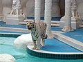 The Mirage White Tiger.jpg