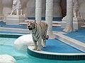 The Mirage White Tiger.jpg