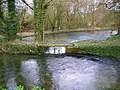 The River Piddle, Affpuddle - geograph.org.uk - 1174980.jpg