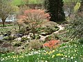 The Weir Garden in Spring - geograph.org.uk - 462093.jpg