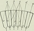 The biology of dragonflies (Odonata or Paraneuroptera) (1917) (20195717629).jpg