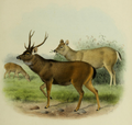 The deer of all lands (1898) Indian sambar.png
