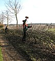 The laying of a traditional hedge (5a) - geograph.org.uk - 1750499.jpg