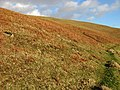 The south west slopes of Hog Hill - geograph.org.uk - 683117.jpg