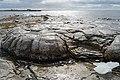 Thrombolites - Flower's Cove, NL.jpg