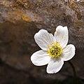 Tiny Wildflower (21440976106).jpg