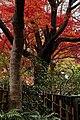 Tofuku-ji (4587238863).jpg