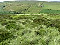 Towards Hordron from Bradshaw - geograph.org.uk - 1387004.jpg