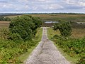 Track from Dur Hill Inclosure, New Forest - geograph.org.uk - 501452.jpg