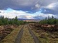 Track through Greshornish Forest - geograph.org.uk - 1712807.jpg