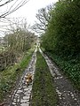 Track up to A56 - geograph.org.uk - 378374.jpg